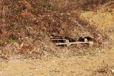 Etape 4 : Résultat final la végétation à repris sur la garennière